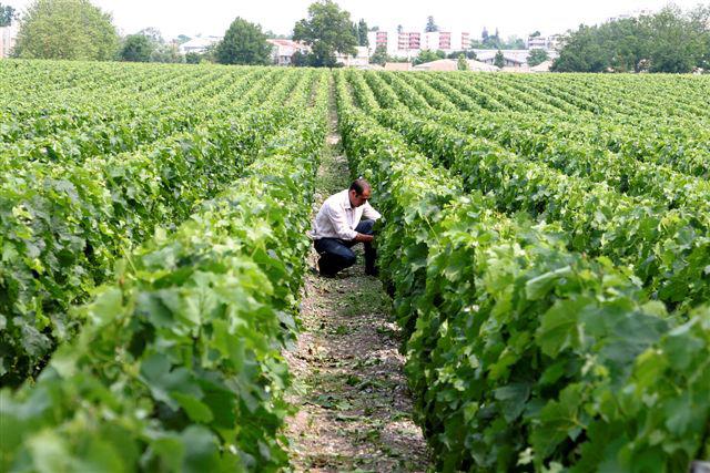 Vignes-Luchey-Halde